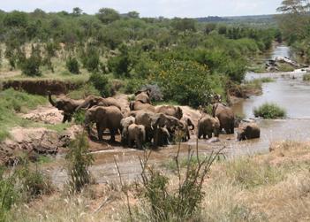 TN-Amboseli