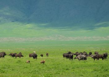 TN-Ngorongoro-Crater